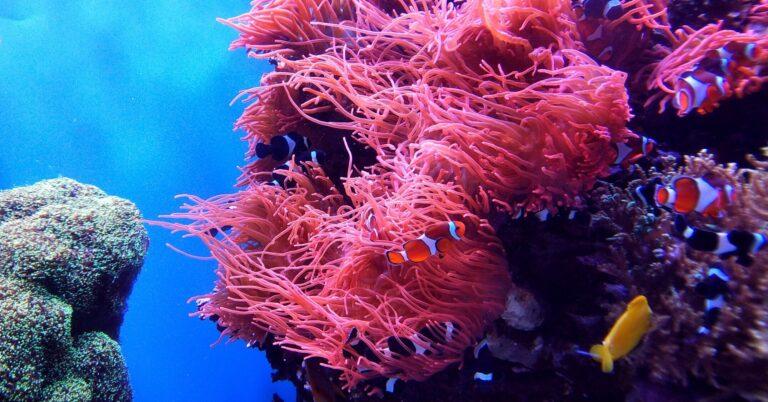 korallzátony