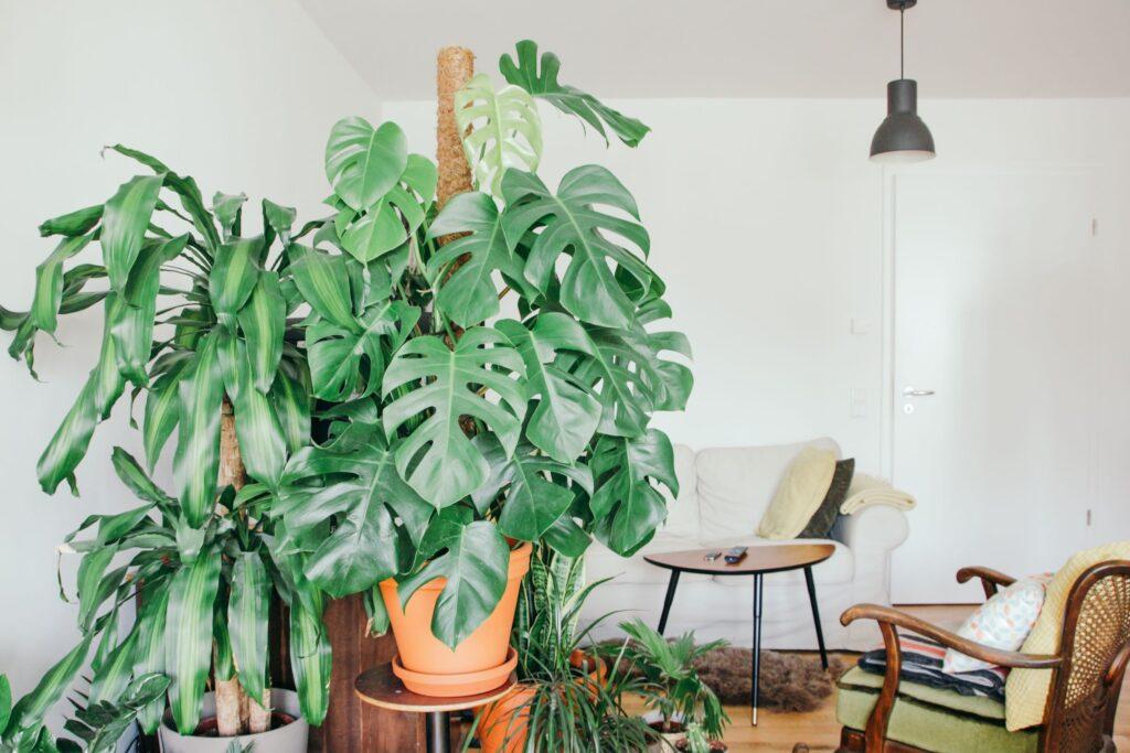 Beltéri növények jótékony hatása