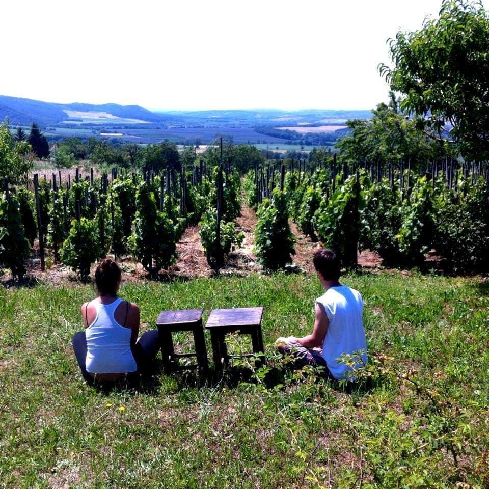 Horváth Botonddal szőlész-borász mérnöki képzésről beszélgettünk