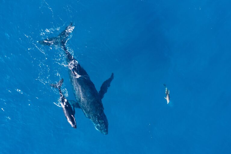 bálna