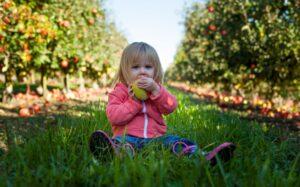 növényi étrend