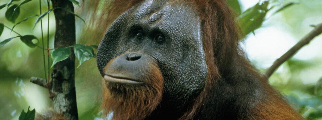 Kihalófélben lévő állatok, melyek lassan eltűnnek a Föld színéről